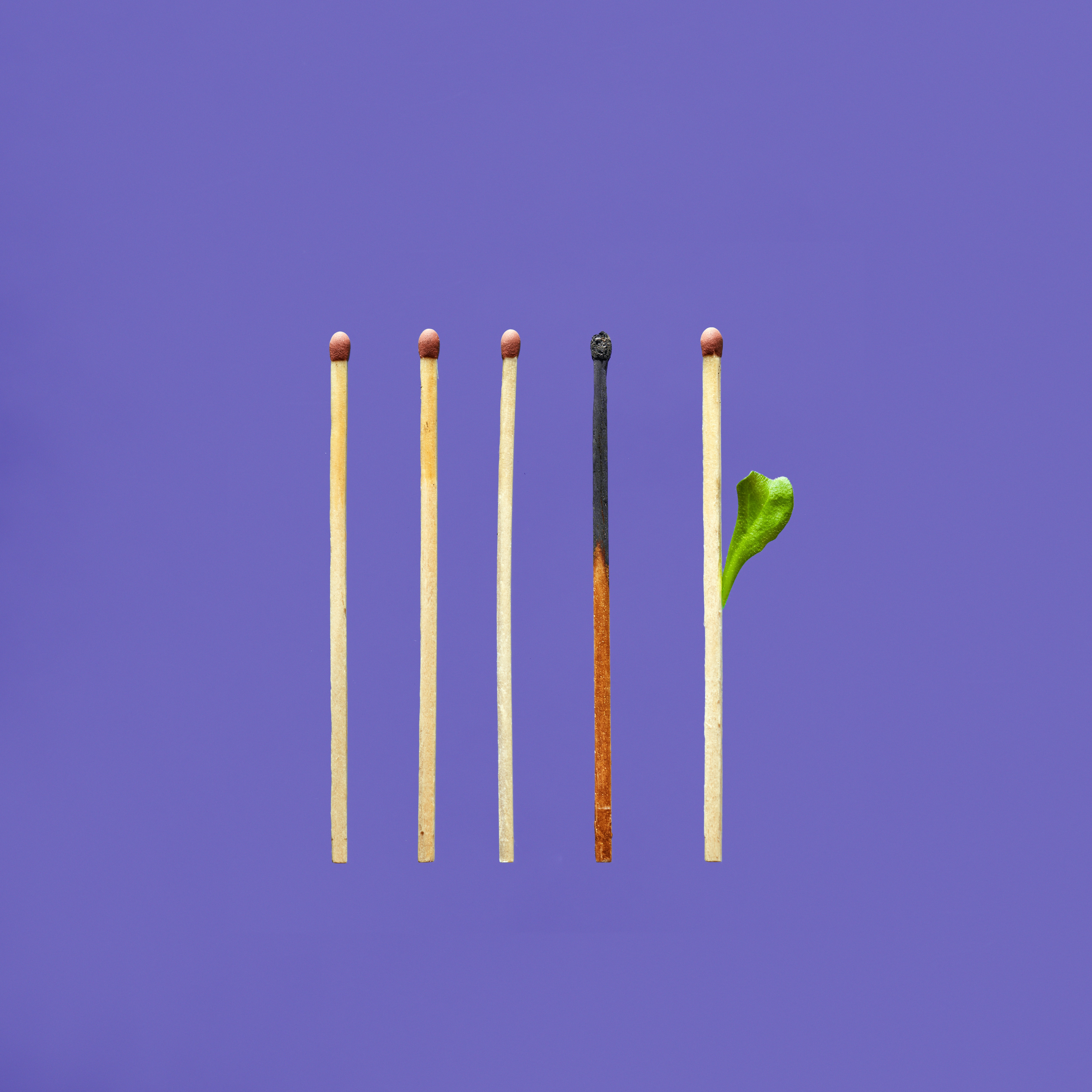 photo of one burnt match surrounded by unused matches, one with a leaf growing out. Posted on Dr. James Goydos 2021 article on burnout.